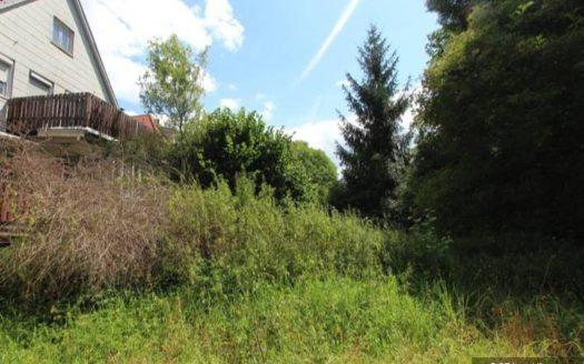 Verwilderter Garten und Bäume vor weißem Haus