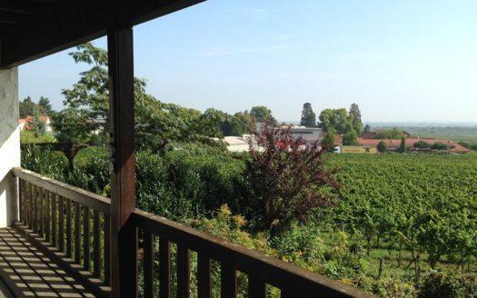 Blick von dem Balkon in der oberen Etage auf Weinreben