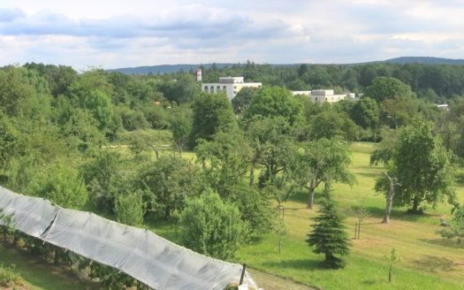 Blick auf Obstbäume und Wiesen
