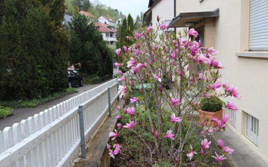 Teilansicht eines Hauses mit blühendem Baum auf kleiner Gartenfläche